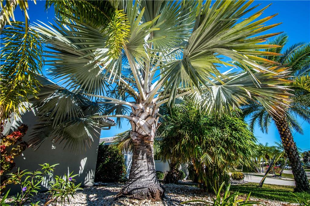 Lush and tropical, this mature landscaping graces front, back and side yard. - Single Family Home for sale at 1440 Appian Dr, Punta Gorda, FL 33950 - MLS Number is C7425399